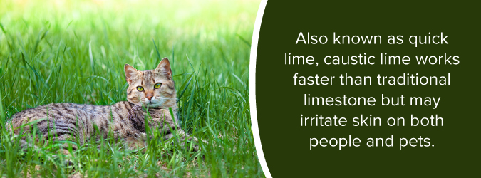can lime hurt pets