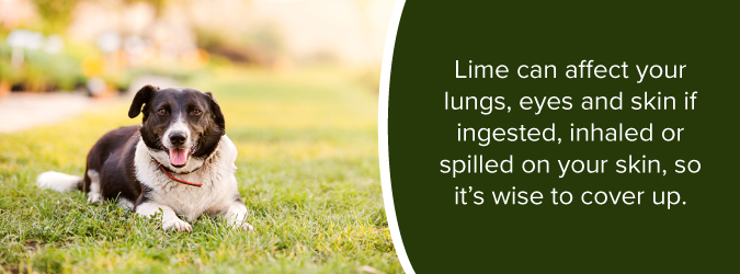 how lime can affect animals