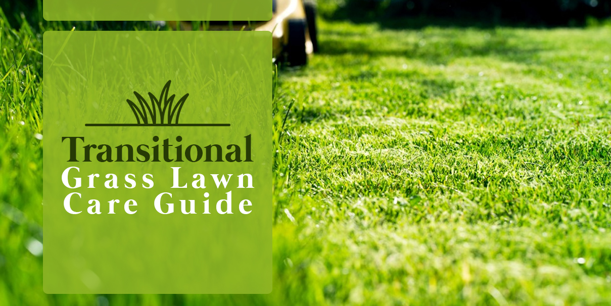 5ccaa7dcc99fcb Grass thrives on a seasonal basis. Depending on the grass type in question,  you might see a lawn thrive in the summer or winter months.