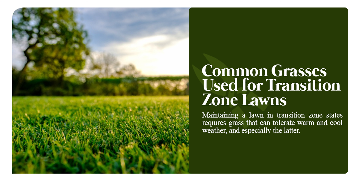Lawn Care Guide for Transitional Grasses | Caring for