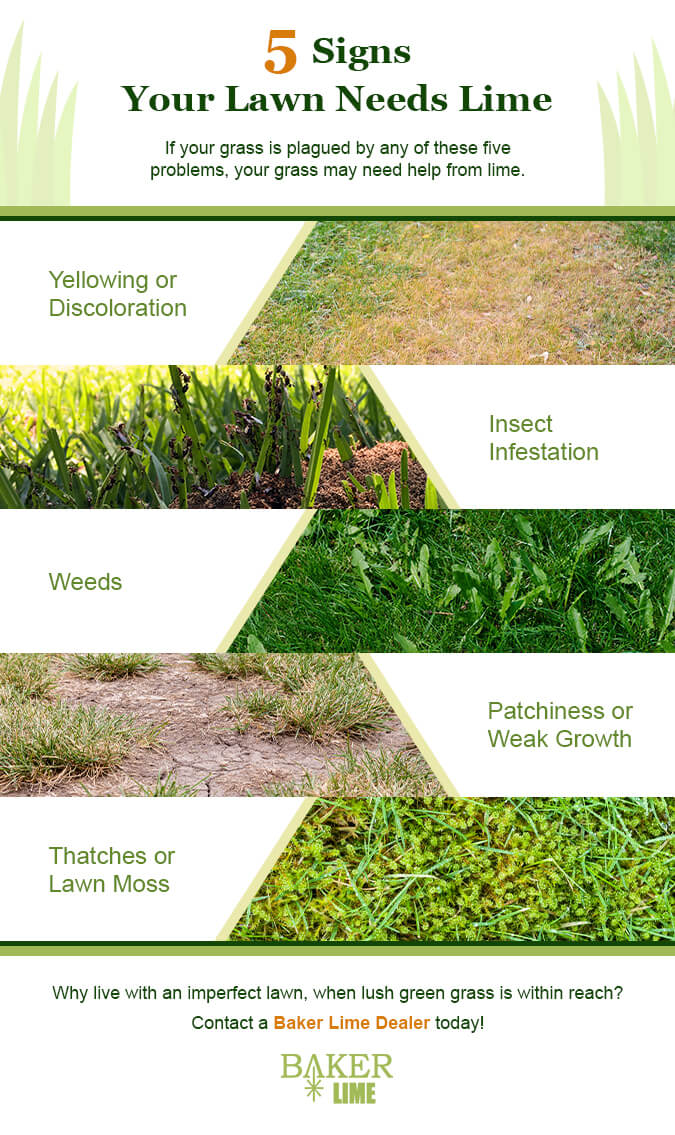 5 Signs Your Lawn Needs Lime